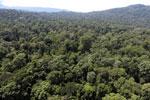 Borneo rainforest -- sabah_aerial_1505