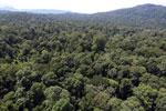 Borneo rainforest -- sabah_aerial_1506