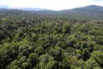 Borneo rainforest -- sabah_aerial_1507
