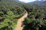 Muddy river and blackwater river converge in Borneo