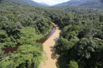 Sedimentation of a river in Borneo due to logging -- sabah_aerial_1540
