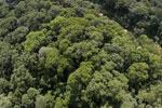 Borneo rainforest -- sabah_aerial_1561