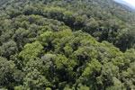 Borneo rainforest -- sabah_aerial_1563