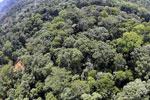 Borneo rainforest -- sabah_aerial_1564