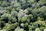 Borneo rainforest -- sabah_aerial_1591