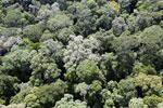 Borneo rainforest -- sabah_aerial_1592