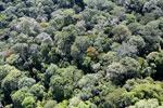 Borneo rainforest -- sabah_aerial_1593