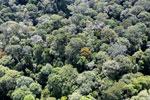 Borneo rainforest -- sabah_aerial_1594