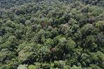 Borneo rainforest -- sabah_aerial_1600