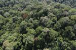 Borneo rainforest -- sabah_aerial_1603