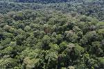 Borneo rainforest -- sabah_aerial_1604
