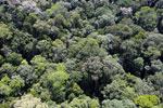 Borneo rainforest -- sabah_aerial_1606