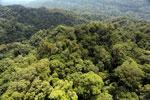 Borneo rainforest -- sabah_aerial_1610