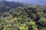Borneo rainforest -- sabah_aerial_1611
