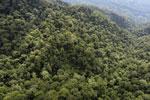 Borneo rainforest -- sabah_aerial_1614