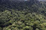 Borneo rainforest -- sabah_aerial_1618