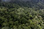 Borneo rainforest -- sabah_aerial_1622