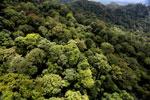 Borneo rainforest -- sabah_aerial_1625