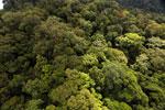 Borneo rainforest -- sabah_aerial_1629