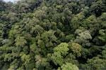 Borneo rainforest -- sabah_aerial_1633