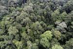 Borneo rainforest -- sabah_aerial_1635