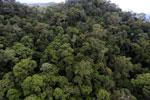 Borneo rainforest -- sabah_aerial_1636
