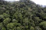 Borneo rainforest -- sabah_aerial_1637