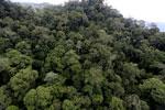 Borneo rainforest -- sabah_aerial_1638