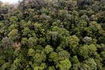 Borneo rainforest -- sabah_aerial_1640