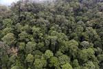 Borneo rainforest -- sabah_aerial_1643