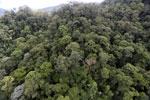 Borneo rainforest -- sabah_aerial_1646
