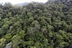 Borneo rainforest -- sabah_aerial_1647