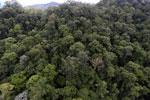 Borneo rainforest -- sabah_aerial_1648