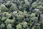 Borneo rainforest -- sabah_aerial_1650