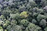 Borneo rainforest -- sabah_aerial_1654