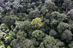 Borneo rainforest -- sabah_aerial_1655