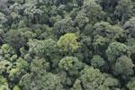 Borneo rainforest -- sabah_aerial_1656
