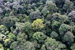 Borneo rainforest -- sabah_aerial_1657