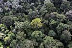 Borneo rainforest -- sabah_aerial_1658