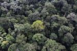 Borneo rainforest -- sabah_aerial_1659