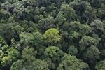 Borneo rainforest -- sabah_aerial_1660