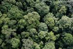 Borneo rainforest -- sabah_aerial_1662