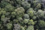 Borneo rainforest -- sabah_aerial_1663
