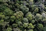 Borneo rainforest -- sabah_aerial_1664