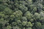 Borneo rainforest -- sabah_aerial_1665