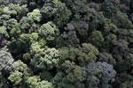 Borneo rainforest -- sabah_aerial_1667
