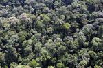 Borneo rainforest -- sabah_aerial_1668