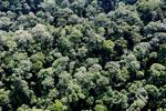 Borneo rainforest -- sabah_aerial_1669