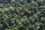 Borneo rainforest -- sabah_aerial_1670