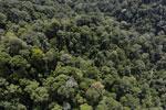 Borneo rainforest -- sabah_aerial_1674